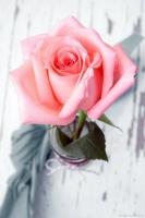 ندى الورد