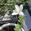 Sara Ahmed Hassen